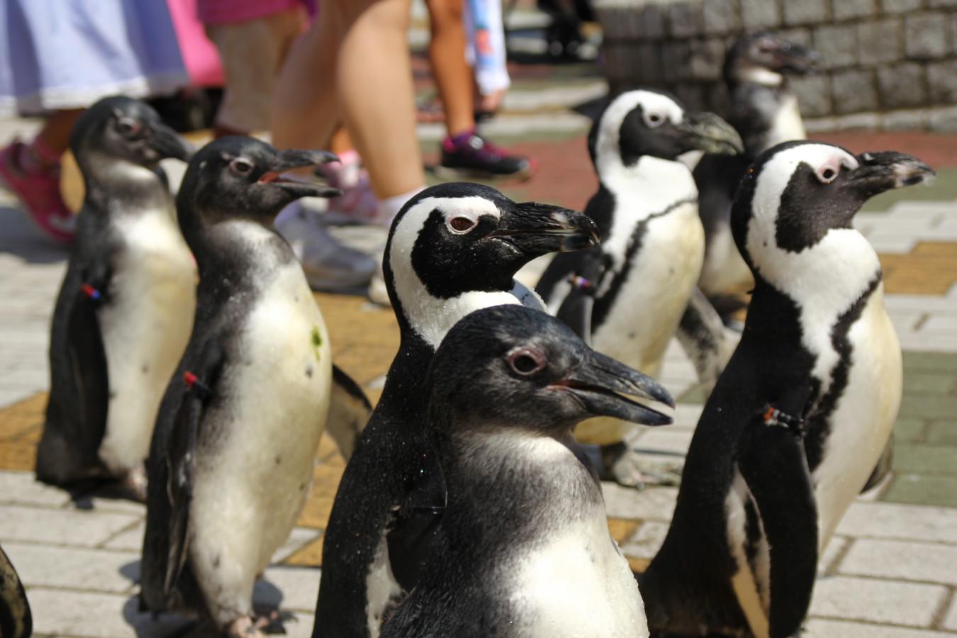 和歌山-ペンギンパレード